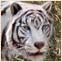 Тигрис в TimeZero